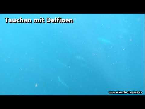 Schwimmen und Tauchen mit Delfinen auf Mauritius