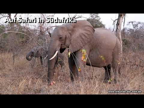 Südafrika - Impressionen unserer Safaris im Sommer 2017