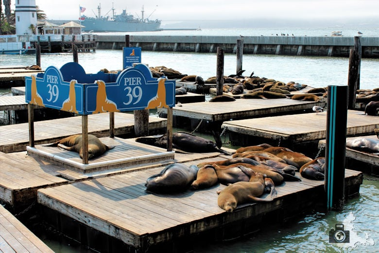 San Francisco - Seelöwen am Pier 39