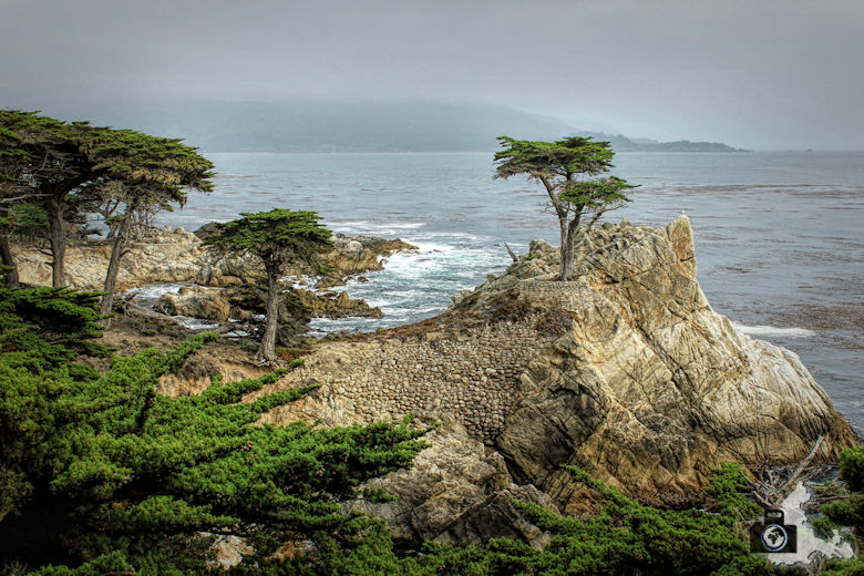 17 Mile Drive, Monterey, Lone Cypress