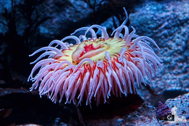 Monterey Bay Aquarium - Koralle