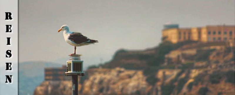 Reisebericht San Francisco - Alcatraz und andere Sehenswürdigkeiten
