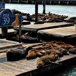 Stars seit 25 Jahren – die Seelöwen von Pier 39
