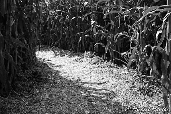 Maislabyrinth Opfingen