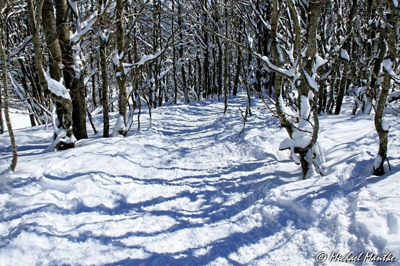 Schneeschuhwanderweg