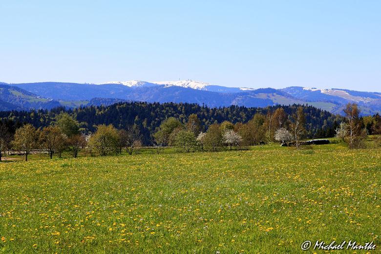 Wiesen mit Blick auf den schneebedeckten Feldberg