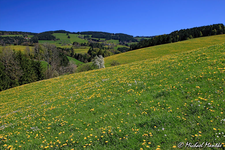 Hochschwarzwald Landschaft zwischen St. Peter und St. Märgen