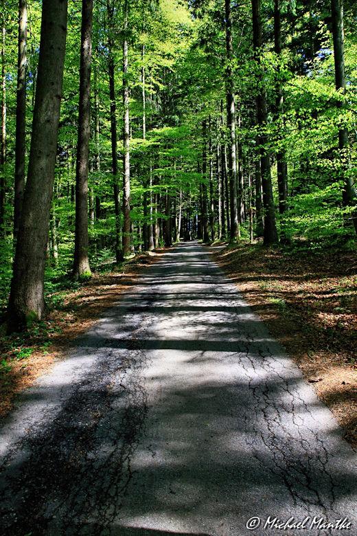 Wanderweg im Wald zwischen St. Peter und St. Märgen