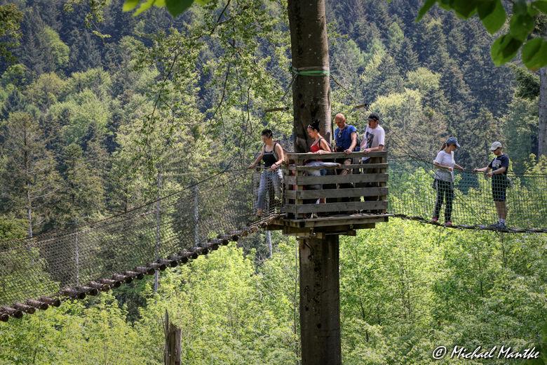 Baumkronenweg Waldkirch Hängebrücke Abenteuerweg