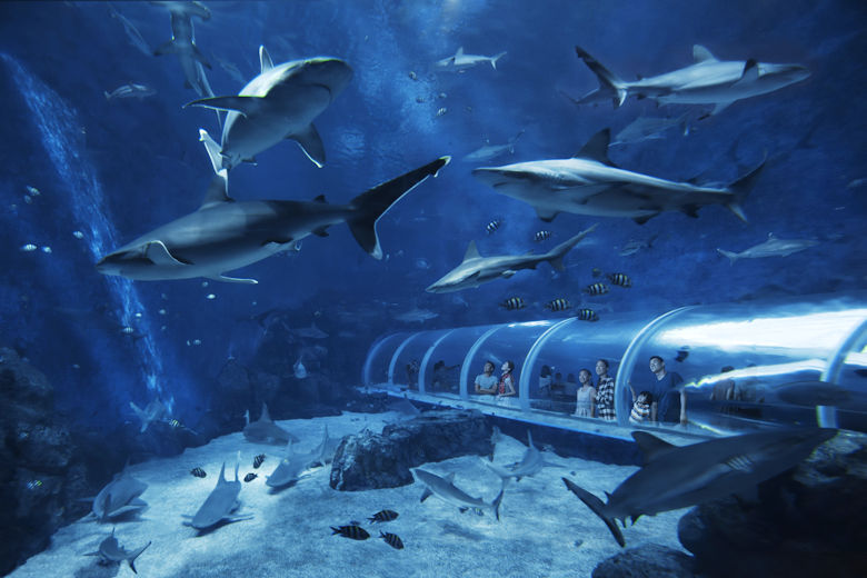 S.E.A. Aquarium Singapur