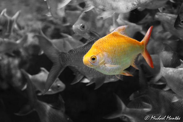 Unterwasserwelten - Fisch im Fischschwarm
