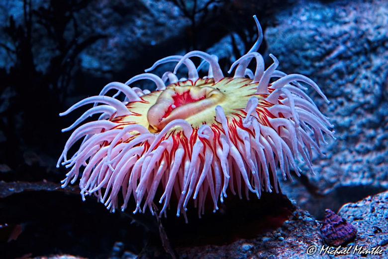 Unterwasserwelten - Korallen