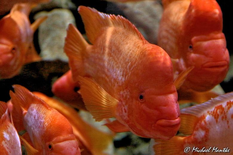 Unterwasserwelten -Fischschwarm im Aquarium