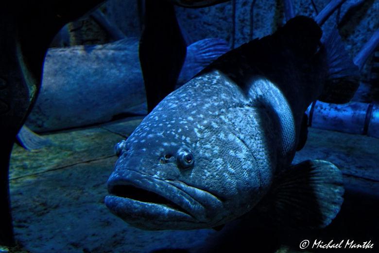 Unterwasserwelten - Riesenfisch