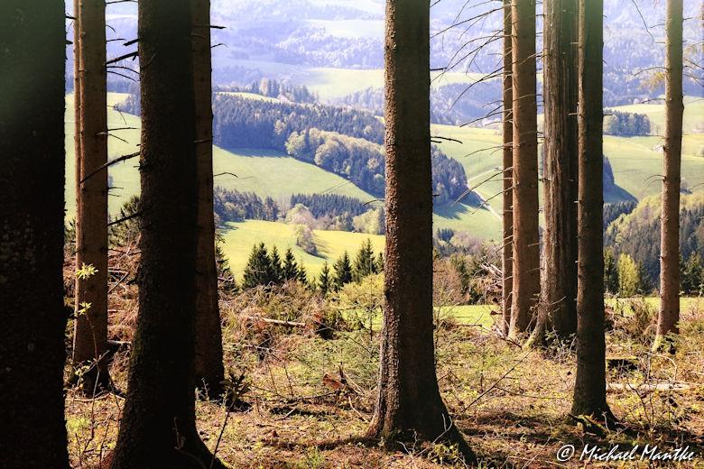 Panoramaweg St. Märgen - Blick durch Bäume auf Südschwarzwald