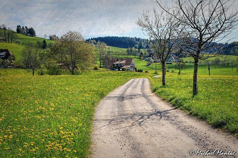 Panoramaweg St. Märgen - Weg nach Schmittenbach