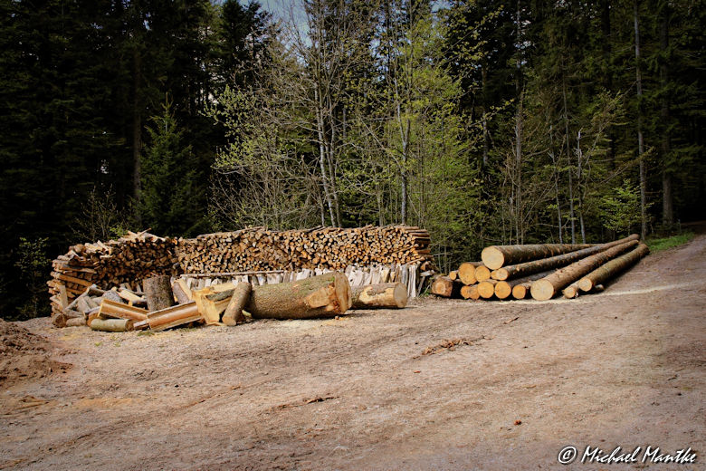 Panoramaweg St. Märgen - Lagerndes Holz im Wald