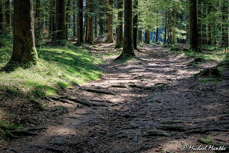 Panoramaweg St. Märgen - Wanderweg im Wald