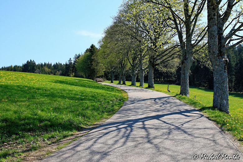 Panoramaweg St. Märgen - Landstraße