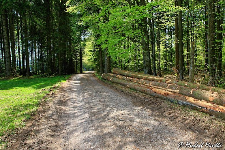 Panoramaweg St. Märgen - Wanderweg durch Wald