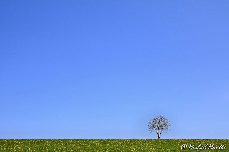 Panoramaweg St. Märgen - Einzelner Baum auf Wiese vor blauem Himmel
