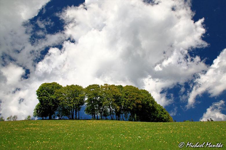 Martin Heidegger Rundwanderweg bei Todtnauberg - Bäume auf Wiese vor Wolken am Himmel