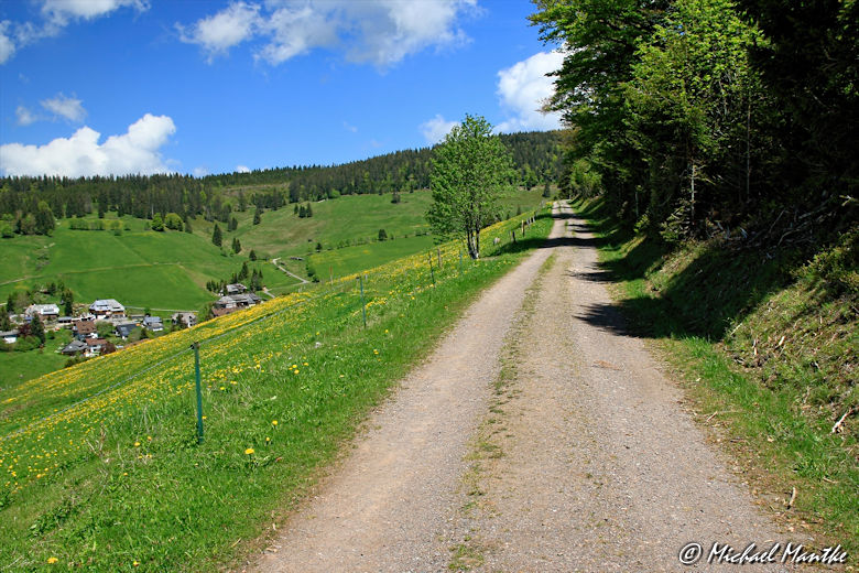 Martin Heidegger Rundwanderweg bei Todtnauberg - Weg entlang von Wiesen