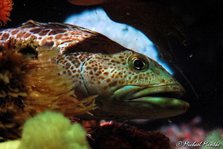Unterwasserwelten - Bunter Fisch