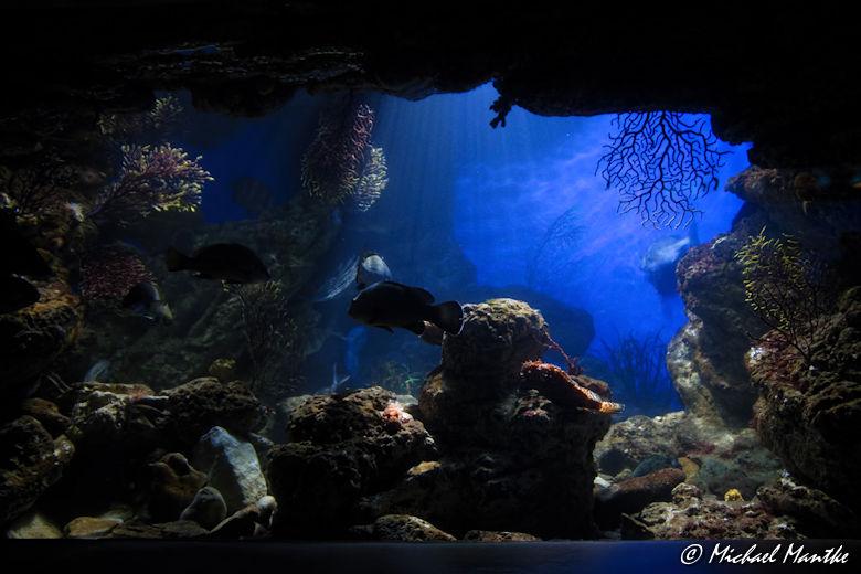 Unterwasserwelten - Meeresaquarium
