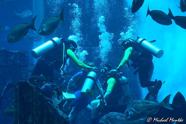Unterwasserwelten - Taucher im Meerwasseraquarium