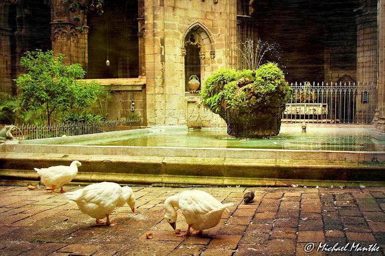 Kathedrale von Barcelona - Gänse im Innenhof