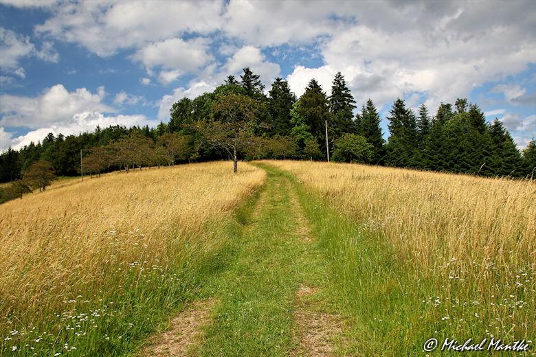 Hahn-und-Henne-Runde Feldweg