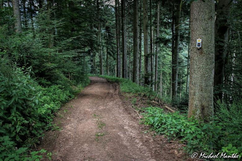 Hahn-und-Henne-Runde Waldweg