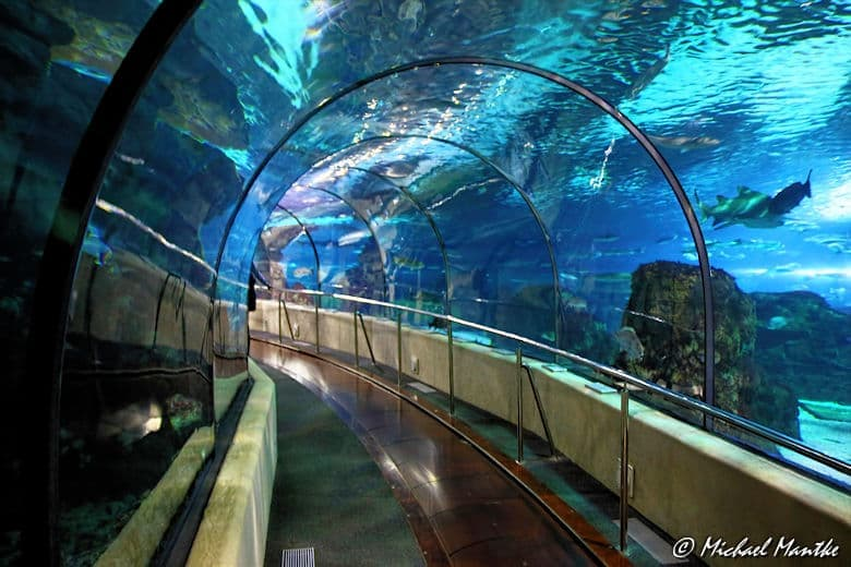 Aquarium Barcelona Unterwassertunnel