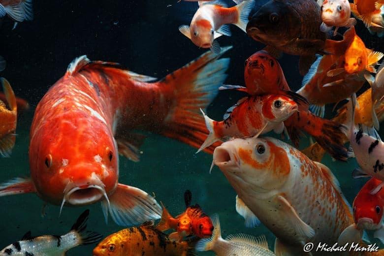 Aquarium Barcelona Fische