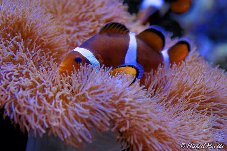 Aquarium Barcelona Nemo