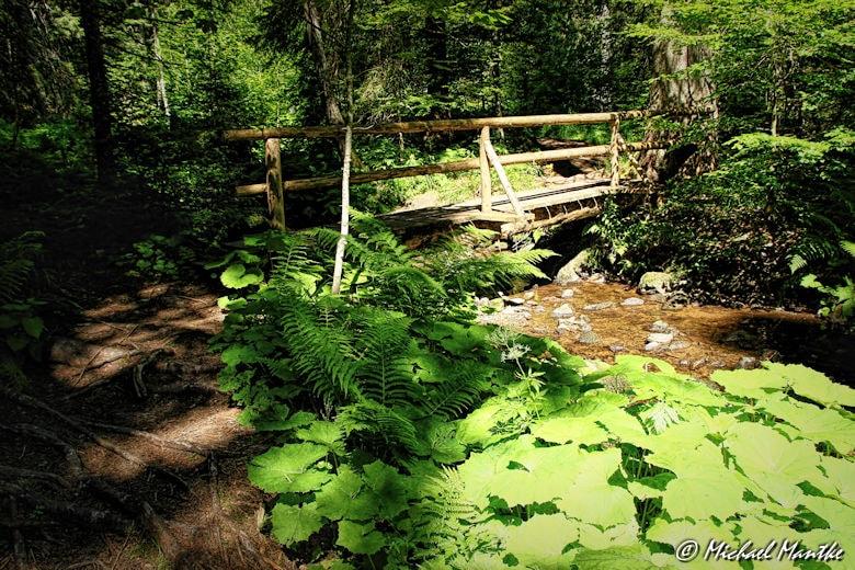 Menzenschwand Geissenpfad Brücke im Wald