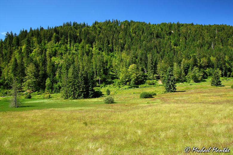 Menzenschwand Geissenpfad Schwarzwald Landschaft