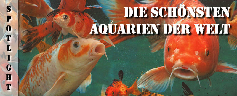 Übersicht über die schönsten Aquarien der Welt
