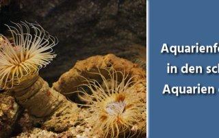 Aquarienfotografie Tipps - schönstes Aquarium der Welt