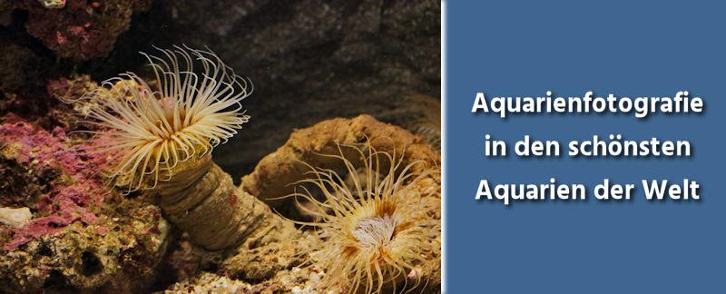 Fototipps Fotografieren von Unterwasserwelten in Aquarien