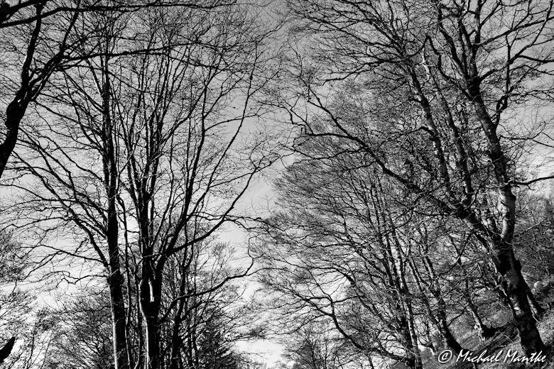 Bäume auf dem Schauinsland
