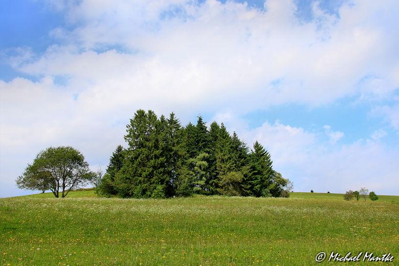Baumgruppe auf Wiese auf dem Wanderweg nach Horben