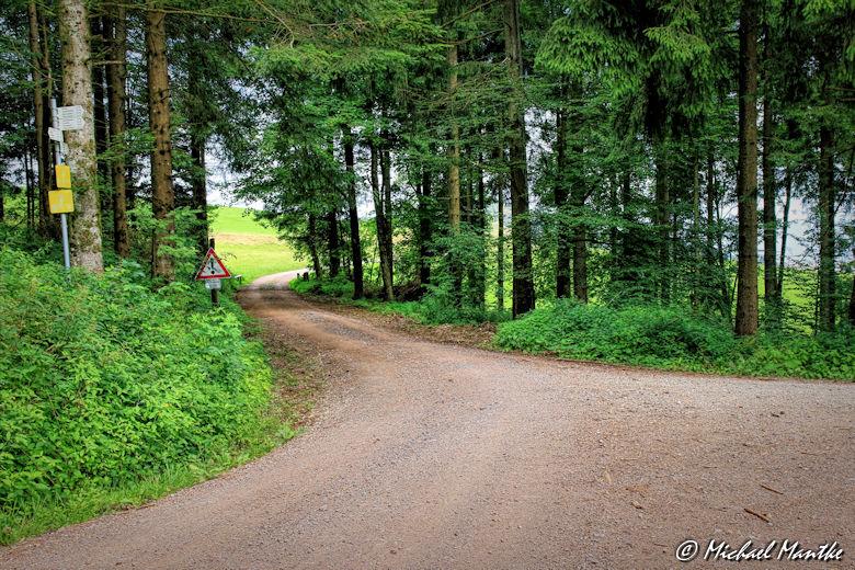 Ende des Waldes auf dem Wanderweg vom Schauinsland nach Horben