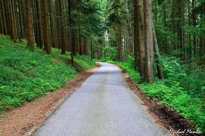 Straße durch den Wald nach Horben