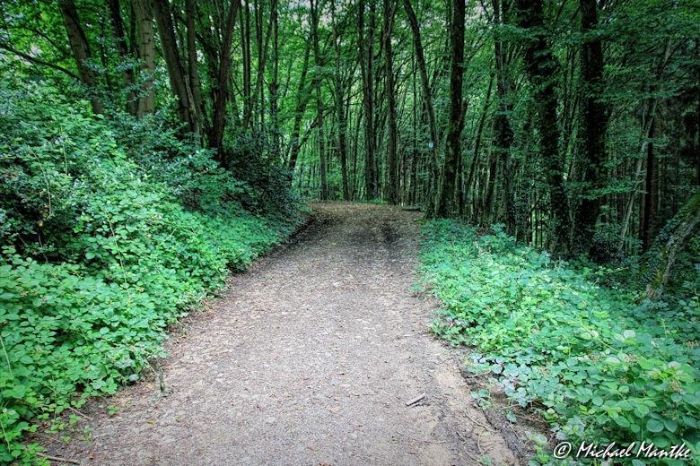 Waldweg auf dem Weg vom Schauinsland nach Horben