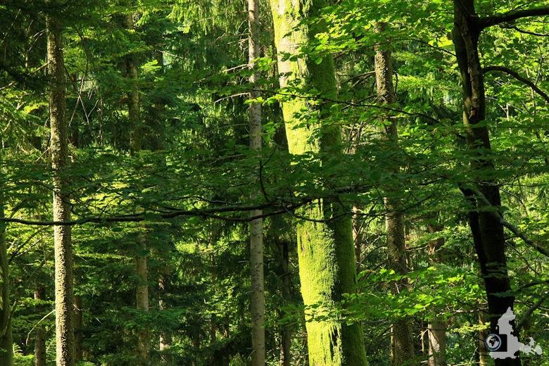 Burgbachwasserfall Wanderung - Grüne Bäume im Wald