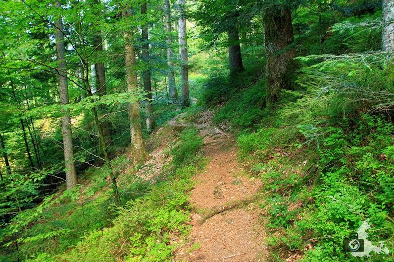 Burgbachwasserfall Wanderung - Waldweg