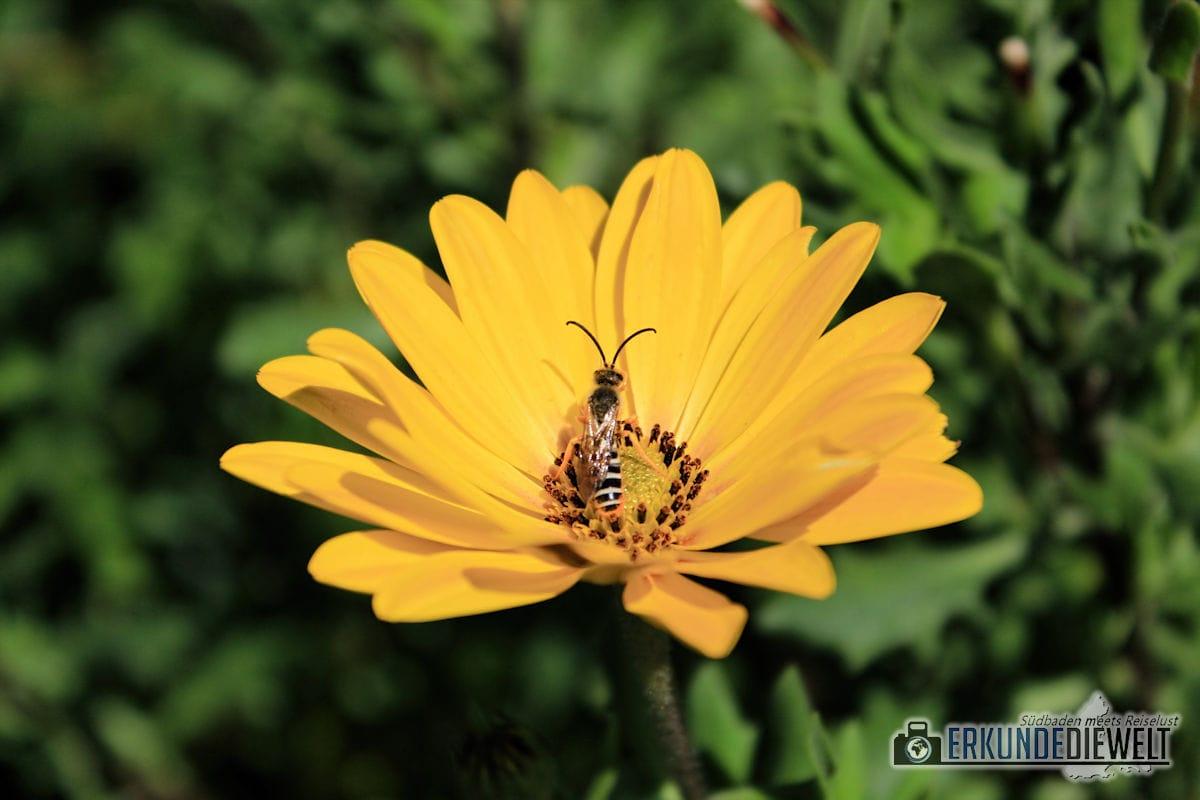 Canon EOS 1300D Beispielbild - Insekt auf Blume