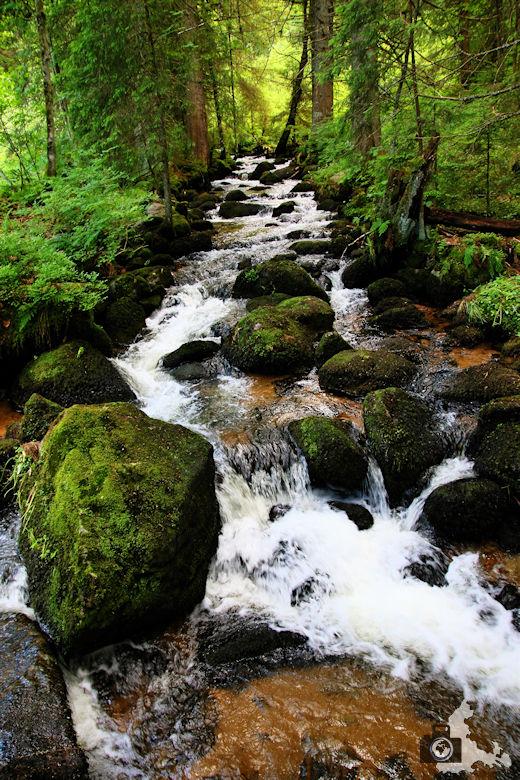 Uhrwaldpfad Rohrhardsberg Fluss Elz